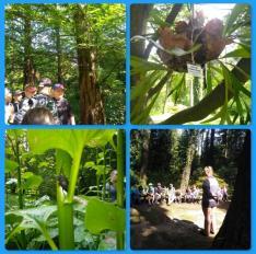 Wycieczka Arboretum 2020 1
